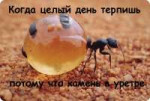 honeypot-ant-diet.jpg